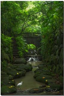 Crane's natural habitat at 虎山溪步道, Taipei, Taiwan