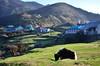 """Wherever you go becomes a part of you somehow"" (eyenamic) Tags: landscape outdoor grass mountain hills green field morning kalipokhri himalaya nepal sandakphutrek singalilanationalpark trek trekking nikon d5100"