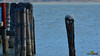 A-LUR_2172 (OrNeSsInA) Tags: trasimeno uccelli bird natura italia umbria castiglionedellago ornessina lucarosi nikon tamron byrd lago chiusi siena perugia aironi cormorani