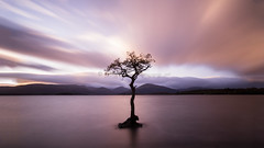Loch Lomond Tree (pixellesley) Tags: lochlomond tree water lake loch sundown sunset evening longexposure autumn scotland landscape seascape lesleygooding