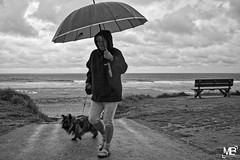 temps de chien DxOFP  LM+35 1005028 (mich53 - thank you for your comments and 4M view) Tags: plage beach clouds nuages nuageux normandy normandie france frankreich monochrome noirblanc blackwhite leicamtype240 summiluxm35mmf14asph lespieux manche parapluie pluie rain rangefinder télémètre telémetro banc paysage dog mer océan vacances 2017 coastling