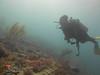 7DecAM2017 (Sail Fish Scuba) Tags: key largo elbow reef city washington hannah m bell