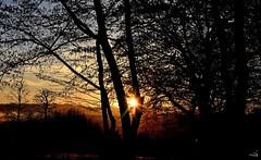 Entre les troncs (Diegojack) Tags: paysages sileil soleilcouchant lumière bois forêt echandens contrejour t