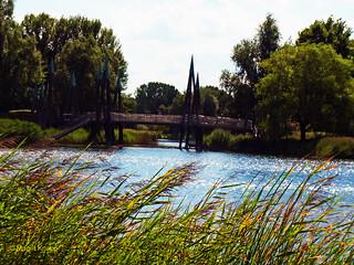 Wasserlandschaft mit Schilf