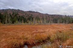 171017-23 Marécage (clamato39) Tags: marais marsh parcnationaldelajacquescartier parcsquébec provincedequébec québec canada autumn automne ciel sky clouds nuages