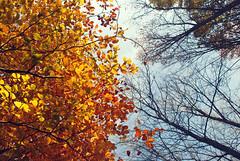 DSC_1863 (FMAG) Tags: 2017 żabieniec zalesie jesien