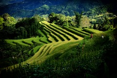 Hoàng Su Phì, Vietnam (beudii) Tags: hoàng su phì vietnam north asia asien rice fields landscape light shadow autumn fall herbst wandern hiking outdoor travel travelling reisen wanderlust fernweh