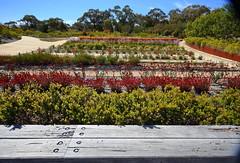 Cranbourne RBG Australian cultivars- Nov 2017 096 (Graeme Butler) Tags: water landscape history gardens australianplants architecture victoria australia