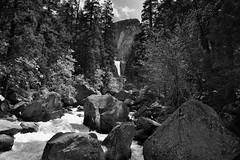The Merced River and a Setting of Trees and a Mountain Backdrop (Black & White, Yosemite National Park) (thor_mark ) Tags: blackwhite nikond800e day5 triptopasoroblesandyosemite yosemitenationalpark lookingeast capturenx2edited colorefexpro outside trees hillsideoftrees blueskieswithclouds nature landscape rapids mercedriver river mountains mountainsindistance mountainsoffindistance pacificranges sierranevada yosemiterittersierranevada centralyosemitesierra yosemitevalley johnmuirtrail morninghiketovernalfall libertycap mountainbeyondthetrees boulders bouldersinriver project365 california unitedstates