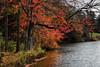 "Orange leaves (Millie (On and Off)) Tags: ""saveearth"" ""inspiredbylove"" soe trees foliage autumn fall sweetarrowlakecountypark schuylkillcounty pennsylvania water lake outdoor"