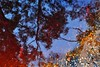 Singin' in the Rain (holly hop) Tags: nature puddle stones abstract colourful gravel leaves outdoor postprocessing rain reflection sliderssunday wet