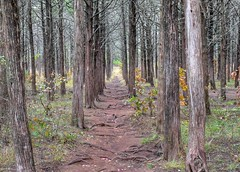 2017 - Wichita Mountains Wildlife Refuge (zendt66) Tags: zendt66 zendt nikon d7200 wichita mountains wildlife refuge camping hiking