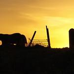 sun-rise thumbnail