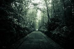 Helvegen (mnich966) Tags: helvegen norse trees path