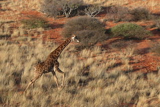 South Africa Hunting Safari - Northern Cape 94