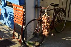 Je m'en occupe (Jean-Luc Léopoldi) Tags: oignons bretagne bicyclette chair chaise soleil ombres roscoff finistère aoc