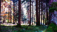Val Concei (Eternally Forgotten) Tags: welschtirol trentino italy italia italien italian province trento trient ledro valley locca enguiso lenzumo concei pieve molina nature alps prealps woods forest woodland trees foresta walking hiking path alone desolate october autumn fall autumnal memories recollections volunteering cold silence tranquillity calm soothing beautiful landscape journey travel tourism trip adventure eternal meadows exploring unknown voyage