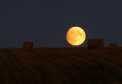 Big Moon Rising..x (Lisa@Lethen) Tags: moon big harvest yellow weather night nature unning work lisa st