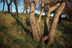 Herbstlicht (p h o t o . w o r l d s) Tags: abendrot eveninglight eveningsun autumlight beautifullight seebenerberge fujixt10 7artisans25mmf18 photoworlds