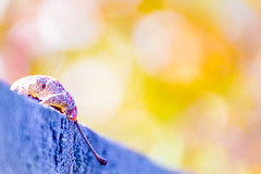 Happy Autumn Day (NathalieSt) Tags: europe france hérault lagrandemotte languedocroussillon occitanie immeuble nikon nikond750 nikonpassion nikonphotography feuille feuilles leaf leaves automne autumn bokeh