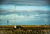 The Seagull oversees seas (-REcallable-Memories-of-ET-) Tags: autumn d5200 eire éire esze herbst hungary ireland irland írország life nikon ősz tamas