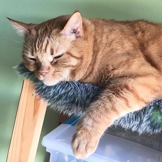 Yup. Still here. #GingerCat #OrangeCat #OrangeTabby #Cat #kitty #OrangeTabbyCat #Cats #kittycat #OrangeCatsRule #CatsOfInstagram #Catstagram #catsagram #�コ #�� #猫 #neko #garfieldcat
