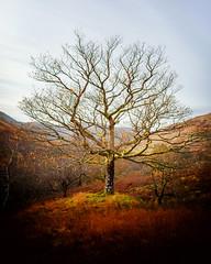 Farewell Autumn (Douglas Hamilton ( days well spent )) Tags: glen luss scotland autumn magical douglas hamilton outdoors landscape explored