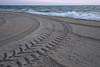 Turn Around (Rich Renomeron) Tags: olympusmzuiko1442mmf3556ez olympusomdem10 beach bethanybeach dawn morning