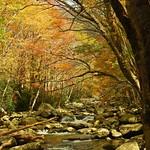 022ex2  autumn Smokies stream thumbnail