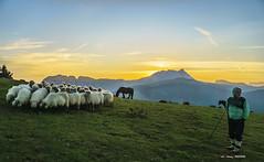 Non da Nere...? (Jabi Artaraz) Tags: jabiartaraz saibi anboto rebaño ovejas pottokas yeguas horse sheep nature amanecer sunset sunrise frío calma madrugar