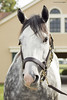 Liam's Map (Casey Laughter Media) Tags: stallion racehorse stud studfarm farm lanesend lexington kentucky breeding winner liamsmap unbridledssong breederscup breederscupdirtmile