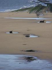 Rocky Pool (Nekoglyph) Tags: redcar cleveland beach sand found face anthropomorphism eyes hair seaweed sea blue water rocks puddles rockpools scars beard