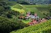 Sasbachwalden Vineyards (amarilloladi) Tags: blackforrest germany sasbachwalden hills vineyards 7dwf landscapes grapes wine crops