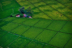 it's green (Emu Alim) Tags: landscape birdseyeview ariel sony a9 green thailand cultivation nature
