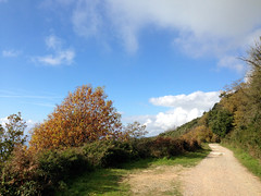 30 (emmess2) Tags: campiglia cinqueterre spezia autumn fall leaves