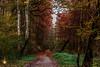 Walk in forest (Orlando Mouchel) Tags: feuilles forêt automne leaves autumn forest herbst blätter wald autunno foglie foresta otoño hojas bosque outono sai floresta الخريف غابة осень листья лес 秋季 树叶 森林 秋 葉