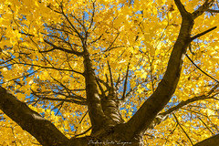 Fuentes del Marques_ 26112017-168 (Pyass2015) Tags: caravaca fuentesdelmarques bosque forrest landscape parque murcia autum otoño