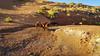 Wild horses find water (gorbould) Tags: 2017 monumentvalley navajotribalpark s6 usa utah america arizona horses phonepic samsung southwest wild wildhorses kayenta unitedstates us