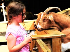 FEED ME, NO FEED ME PLEASE (Visual Images1 (Thanks for over 5 million views)) Tags: goats angeline granddaughter august 2016 binghamton newyork zoo
