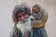 Aseo diario (Jhaví) Tags: varanasi india viajar trip travel asia retrato portrait momo monkey animal
