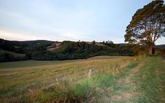 397 Slingsbys Road, Dorrigo NSW