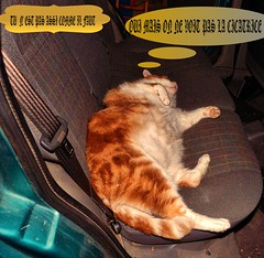 D'ACCORD ON VOIT PAS TA CICATRICE ( MAIS TA CEINTURE  EST OBLIGATOIRE !) (christabelle12300) Tags: pitchounet catmoments voiture