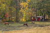 Horse pasture - Anderson S.C. (DT's Photo Site - Anderson S.C.) Tags: canon 6d 24105mml lens upstate andersonsc rural southern country dusty gravel paved road horses covered bridge stream pasture farm pastoral grazing old building rustic scenic landscape southernlife fall autumn foliage