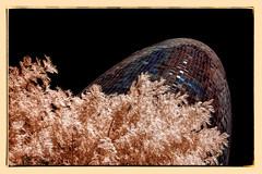 Agbar i les fases del cicle hidrològic. Fase #3-Precipitació (Ar@lee) Tags: barcelona catalunya airelibre torreagbar jeannouvel clot bordeparafotos construcción d50 espectrecomplet exteriors fullspectrum filtre720nm fotografíainfraroja photographyinfrared ir nikond50 paisajeurbano arquitectura red clouds sky tree blue naranja
