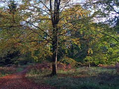 Autumn In The Forest (Marc Sayce) Tags: arboretum trees colours fall leaves autumn november 2017 alice holt forest hampshire wrecclesham farnham surrey south downs national park