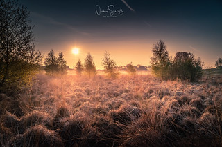 Sunrise with fog and frost ... dunes of Wissel
