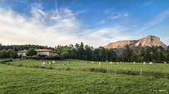 Arripozueta (Jabi Artaraz) Tags: jabiartaraz jartaraz zb euskoflickr arripozueta anboto vacas pradera montaña luz sol otoño nature natur euskadi