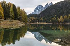 Herbstlicher Morgen (Armin Mathis Fotografie) Tags: schweiz switzerland palpuogna albulapass