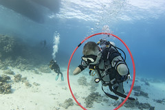 quadruple amputee man takes diving course 27 (KnyazevDA) Tags: disability disabled diver diving deptherapy undersea padi underwater owd redsea buddy handicapped aowd egypt sea wheelchair travel amputee paraplegia paraplegic