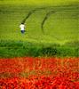 Verde que te quiero rojo (enekopy) Tags: verde rojo amapolas alava cultivo campo labranza